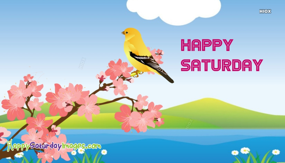 Happy Saturday Bird