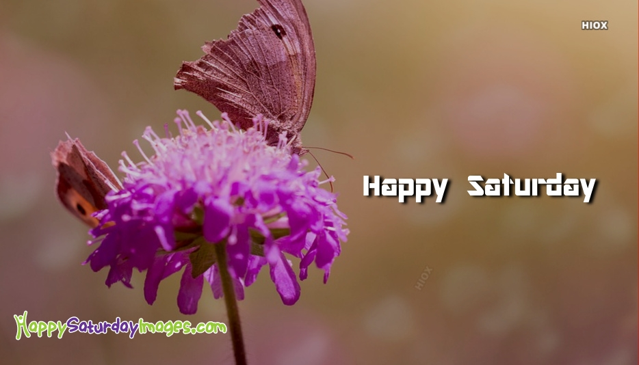 Happy Saturday Images for Butterfly