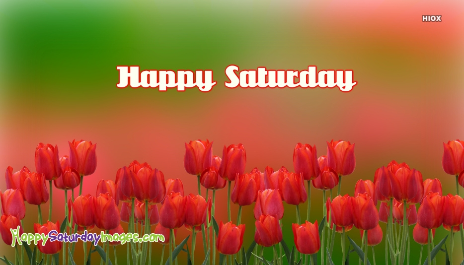Happy Saturday Images With Tulip Flowers