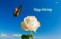 Happy Saturday White Rose