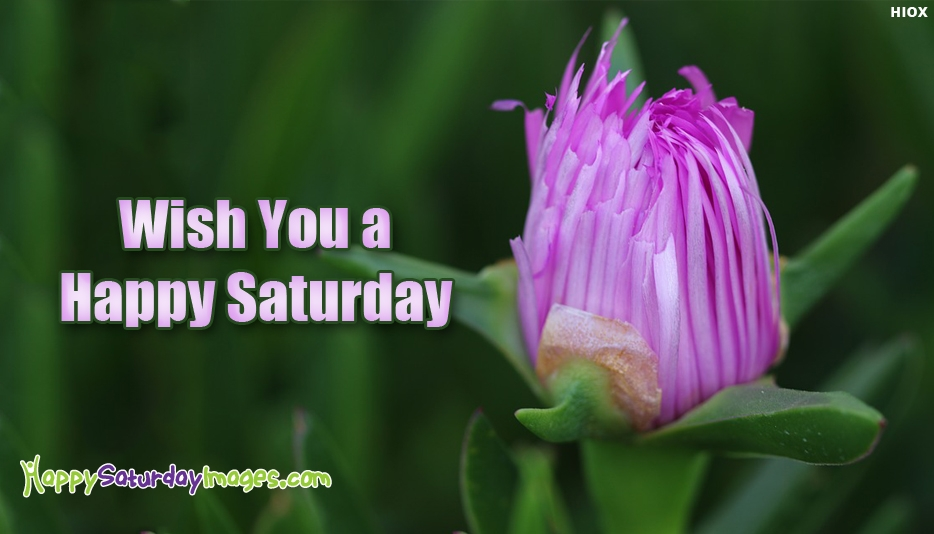 Wish You A Happy Saturday - Happy Saturday Images for Everyone
